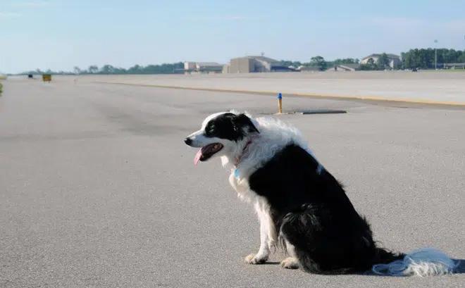 Chó đột nhập sân bay ở Thanh Hóa, máy bay phải chờ hạ cánh-1