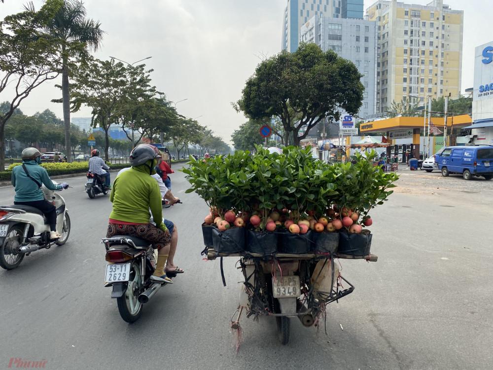 Tưởng giống táo lùn siêu trái, nhiều người mua phải táo gắn lên cây dành dành-9