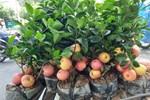 Loại táo Trung Quốc siêu lạ, giá đắt đỏ vẫn 'cháy hàng'-4