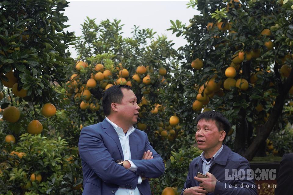 Ngắm cây bưởi cổ được trả giá 300 triệu đồng vẫn không bán tại Hưng Yên-9