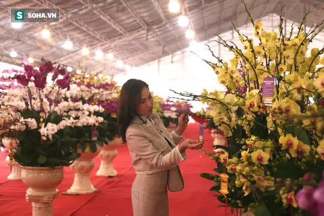 Mãn nhãn dàn lan hồ điệp bạc tỷ ở Hà Nội, đại gia đua nhau dốc ví mua về chơi Tết-12