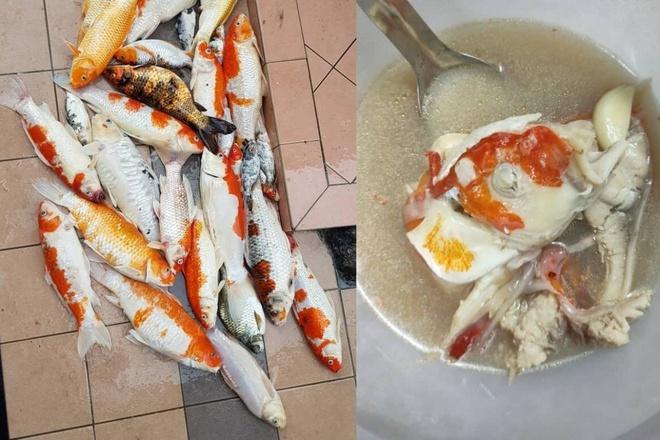Cô gái Malaysia bị chỉ trích vì nấu súp đàn cá Koi-1
