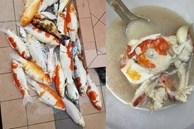 Cô gái Malaysia bị chỉ trích vì nấu súp đàn cá Koi
