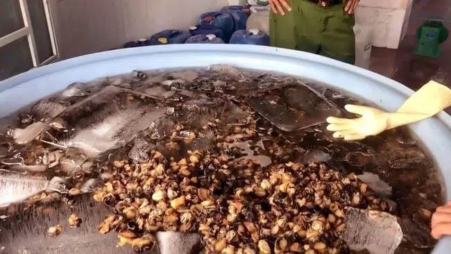 Cận Tết, 1.3 tấn thịt ốc ngâm hóa chất bị phanh phui: Chuyên gia khuyến cáo những điều cực QUAN TRỌNG khi ăn ốc-1