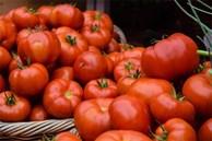Mẹo bảo quản cà chua nhanh chóng mấy tháng trời vẫn tươi ngon như mớ