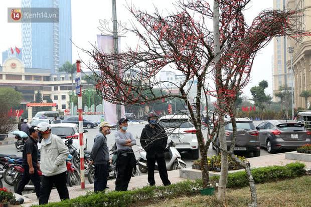"""Hà Nội: Những cành đào rừng Sơn La được dán tem đầu tiên rủng rỉnh"""" xuống phố chờ khách mua về chơi Tết-1"""