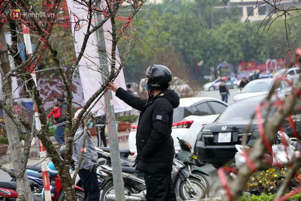 """Hà Nội: Những cành đào rừng Sơn La được dán tem đầu tiên rủng rỉnh"""" xuống phố chờ khách mua về chơi Tết-8"""