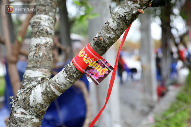 """Hà Nội: Những cành đào rừng Sơn La được dán tem đầu tiên rủng rỉnh"""" xuống phố chờ khách mua về chơi Tết-10"""