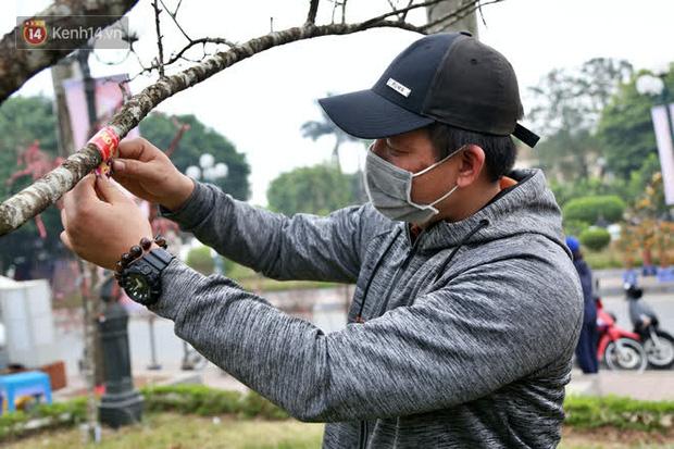 """Hà Nội: Những cành đào rừng Sơn La được dán tem đầu tiên rủng rỉnh"""" xuống phố chờ khách mua về chơi Tết-11"""