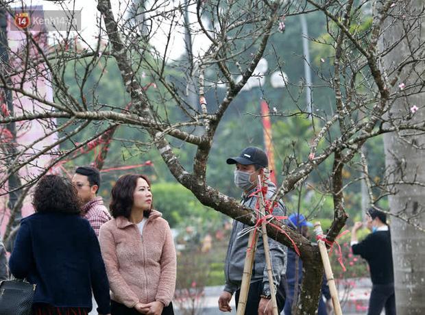 """Hà Nội: Những cành đào rừng Sơn La được dán tem đầu tiên rủng rỉnh"""" xuống phố chờ khách mua về chơi Tết-15"""