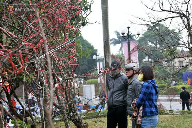 """Hà Nội: Những cành đào rừng Sơn La được dán tem đầu tiên rủng rỉnh"""" xuống phố chờ khách mua về chơi Tết-16"""