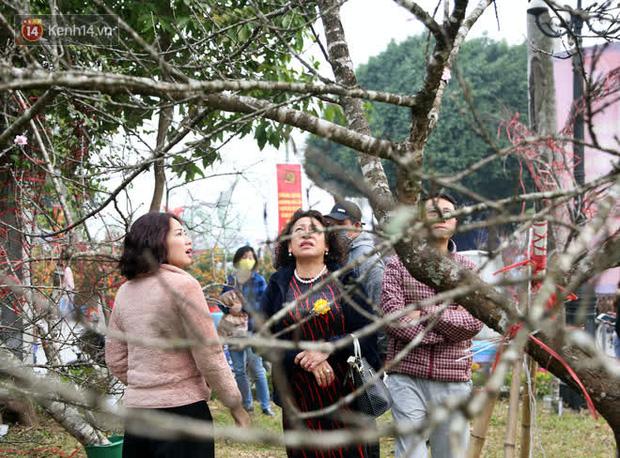 """Hà Nội: Những cành đào rừng Sơn La được dán tem đầu tiên rủng rỉnh"""" xuống phố chờ khách mua về chơi Tết-18"""