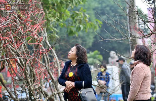 """Hà Nội: Những cành đào rừng Sơn La được dán tem đầu tiên rủng rỉnh"""" xuống phố chờ khách mua về chơi Tết-20"""