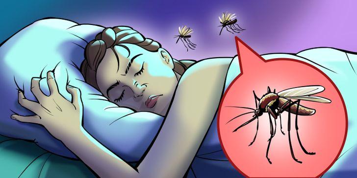 Trời nồm ẩm nhiều muỗi, bạn có để ý tại sao chúng chỉ vo ve gần tai và làm cách nào để phòng tránh nếu lười buông màn?-1