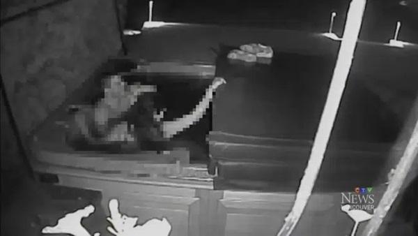 Chồng âm thầm đặt camera để theo dõi vợ khi đi vắng rồi nhận về kết quả ngoài sức tưởng tượng phải đi báo cảnh sát-2