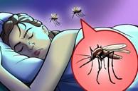 Trời nồm ẩm nhiều muỗi, bạn có để ý tại sao chúng chỉ vo ve gần tai và làm cách nào để phòng tránh nếu lười buông màn?