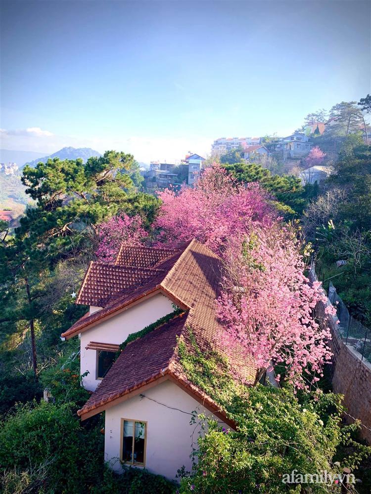 Ngôi nhà nhỏ yên bình sở hữu khu vườn đẹp như xứ sở thần tiên giữa lưng chừng đồi ở Đà Lạt-17