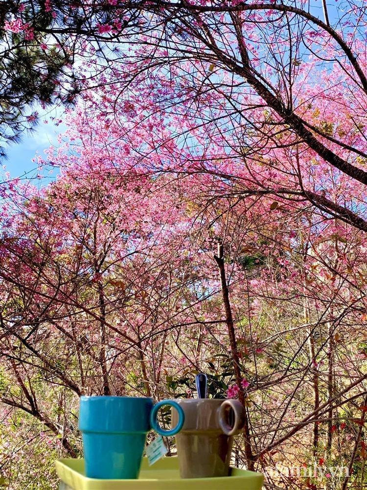 Ngôi nhà nhỏ yên bình sở hữu khu vườn đẹp như xứ sở thần tiên giữa lưng chừng đồi ở Đà Lạt-30