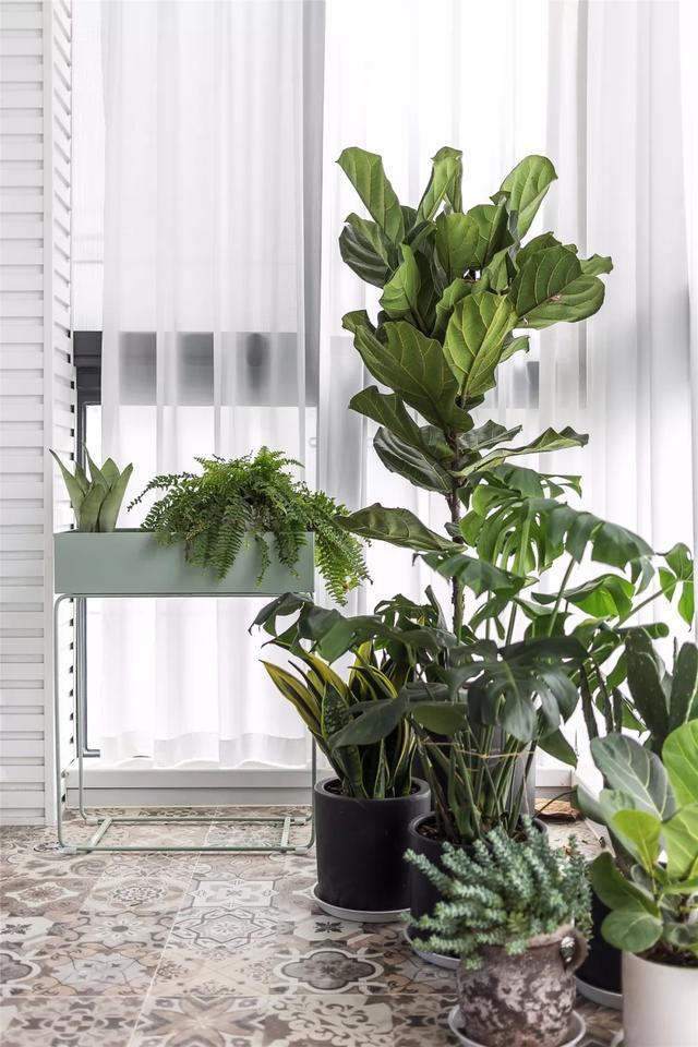 Nên làm gì với cây xanh trong nhà vào kỳ nghỉ Tết về quê dài ngày? 5 cách sau đây sẽ bổ sung nước giúp cây sống khỏe-1