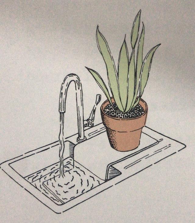 Nên làm gì với cây xanh trong nhà vào kỳ nghỉ Tết về quê dài ngày? 5 cách sau đây sẽ bổ sung nước giúp cây sống khỏe-3