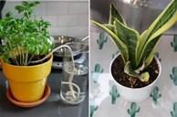 Nên làm gì với cây xanh trong nhà vào kỳ nghỉ Tết về quê dài ngày? 5 cách sau đây sẽ bổ sung nước giúp cây sống khỏe