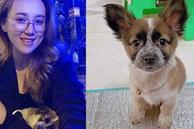 Cô gái 9X nhận nuôi chú cún bị bom hàng: 'Dù trong hoàn cảnh nào cún luôn xứng đáng được yêu thương'