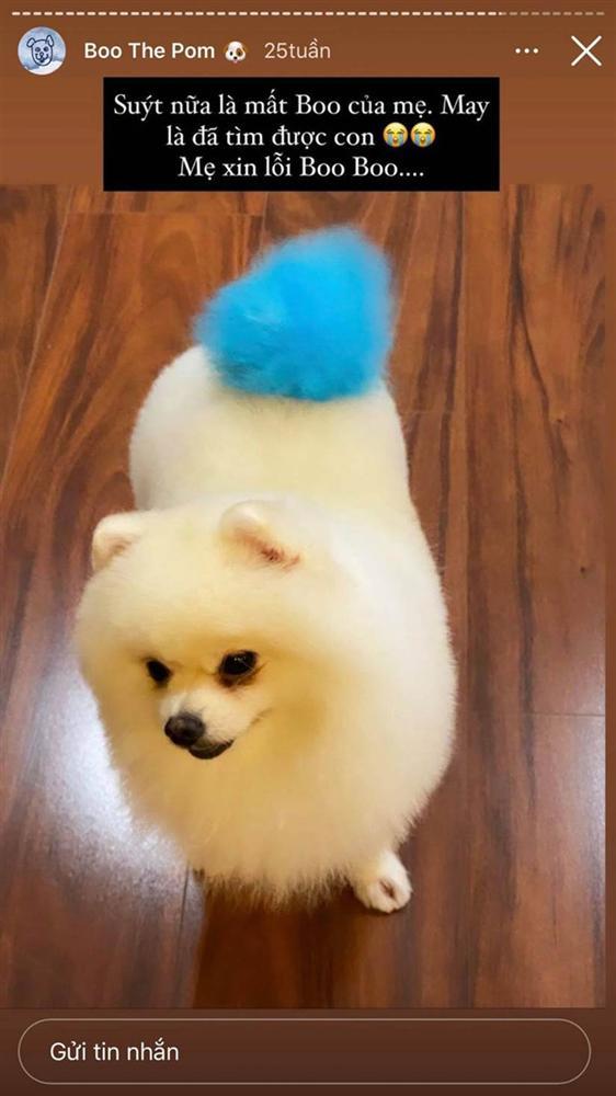 Bạn thân tiết lộ vợ thiếu gia Phan Thành bước vào hào môn nhờ chính chú cún cưng-3