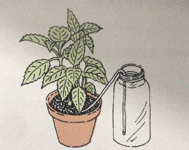 Nên làm gì với cây xanh trong nhà vào kỳ nghỉ Tết về quê dài ngày? 5 cách sau đây sẽ bổ sung nước giúp cây sống khỏe-4