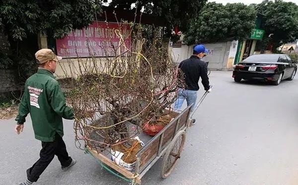 Hải Dương kêu gọi người mua đào Tết hỗ trợ nông dân bị ảnh hưởng bởi dịch Covid-19-1