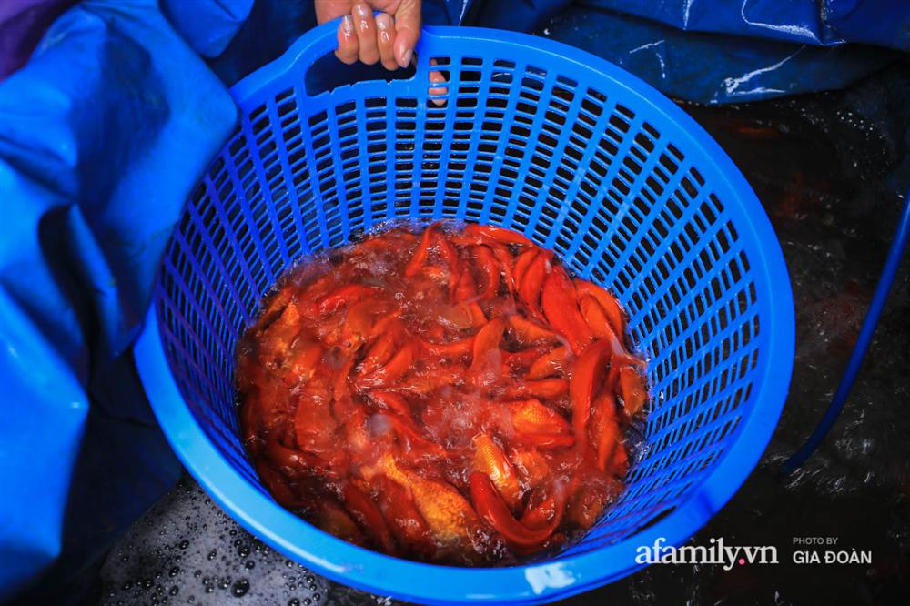 Chợ cá lớn nhất Hà Nội nhộn nhịp trước lễ ông Công ông Táo, dân buôn bở hơi tai vác cả tấn cá mỗi ngày nhưng không rời chiếc khẩu trang-10
