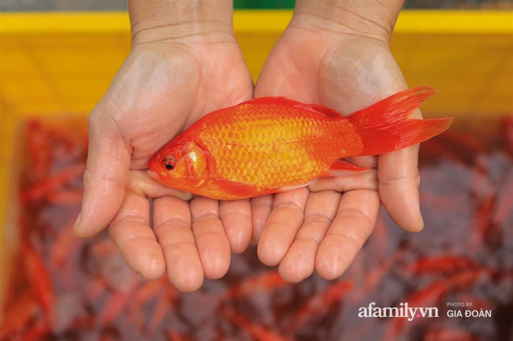 Chợ cá lớn nhất Hà Nội nhộn nhịp trước lễ ông Công ông Táo, dân buôn bở hơi tai vác cả tấn cá mỗi ngày nhưng không rời chiếc khẩu trang-12