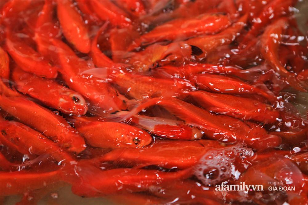Chợ cá lớn nhất Hà Nội nhộn nhịp trước lễ ông Công ông Táo, dân buôn bở hơi tai vác cả tấn cá mỗi ngày nhưng không rời chiếc khẩu trang-14