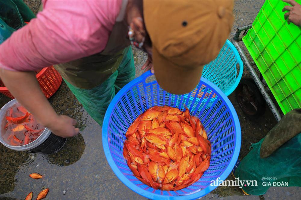 Chợ cá lớn nhất Hà Nội nhộn nhịp trước lễ ông Công ông Táo, dân buôn bở hơi tai vác cả tấn cá mỗi ngày nhưng không rời chiếc khẩu trang-16