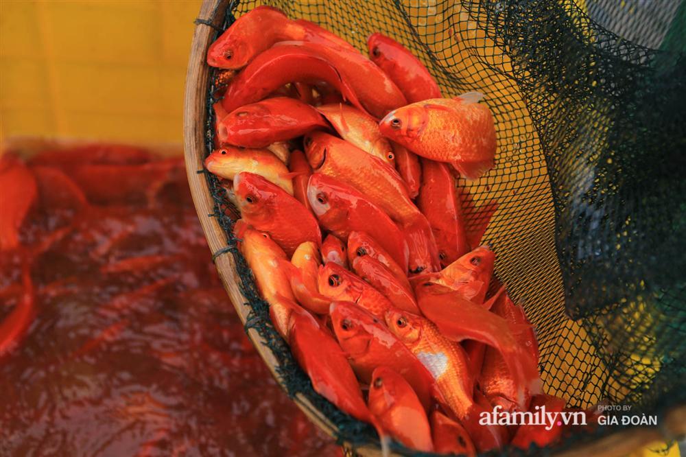 Chợ cá lớn nhất Hà Nội nhộn nhịp trước lễ ông Công ông Táo, dân buôn bở hơi tai vác cả tấn cá mỗi ngày nhưng không rời chiếc khẩu trang-9