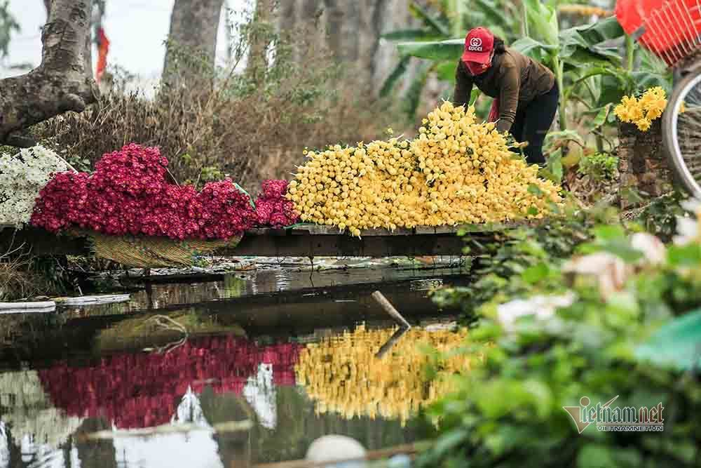 Tai họa ngày cận Tết, cả làng hoa Hà Nội ngồi trên đống lửa-2