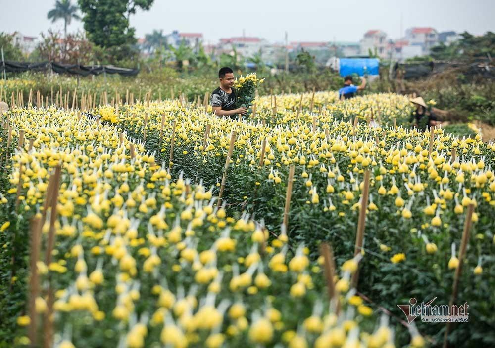 Tai họa ngày cận Tết, cả làng hoa Hà Nội ngồi trên đống lửa-4