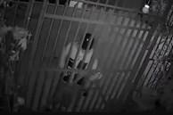 Gã đàn ông đạp tung cổng, xông vào bắt chó, thủ đoạn gây sốc