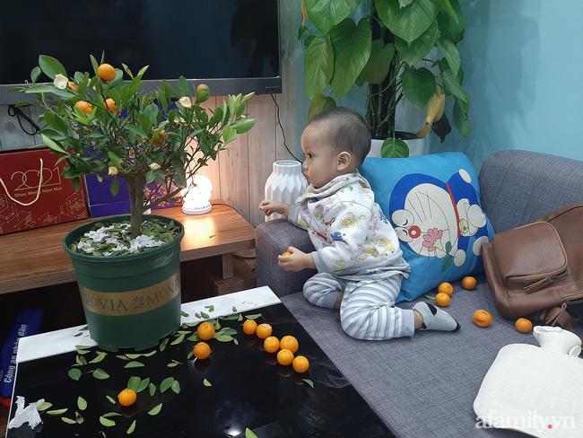 Đầu tư cây quất xinh xinh chơi Tết chưa nổi 1 ngày, ông bố xót ruột nhìn con trai say sưa chơi trò hái quả mùa Xuân-3