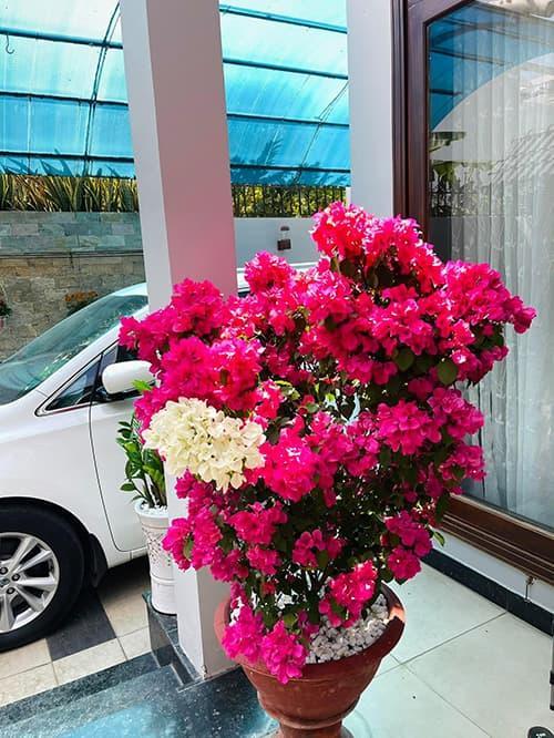 Khám phá không gian nhà rực rỡ sắc hoa của vợ chồng Mạc Văn Khoa-4