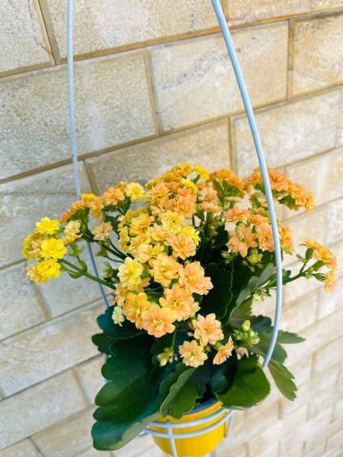 Khám phá không gian nhà rực rỡ sắc hoa của vợ chồng Mạc Văn Khoa-5