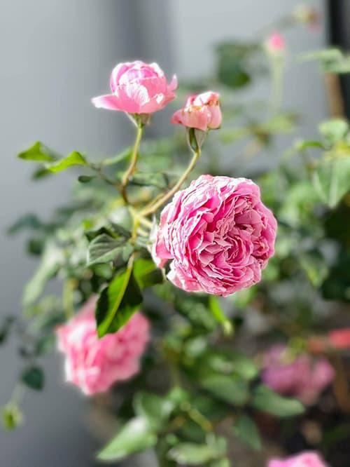 Khám phá không gian nhà rực rỡ sắc hoa của vợ chồng Mạc Văn Khoa-6