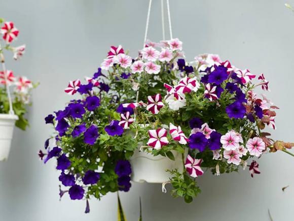 Khám phá không gian nhà rực rỡ sắc hoa của vợ chồng Mạc Văn Khoa-11