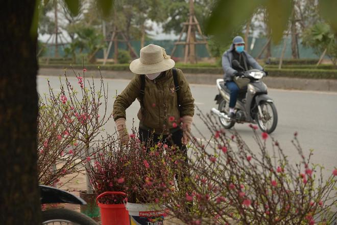 Dân trồng đào lo ngay ngáy vì đã cận Tết mà đào vẫn còn đỏ rực đầy vườn-7