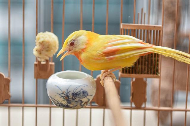 Tay cầm tiền tỷ, đại gia cũng không mua nổi chim ngũ sắc độc nhất Việt Nam-2