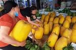 Sự thật đắng ngắt trong trái bưởi thỏi vàng của nhà giàu Việt-4