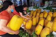Dân mạng xôn xao loại bưởi lạ to như quả bí khổng lồ, ăn được từ vỏ đến ruột với giá lên tới 100k/kg!?