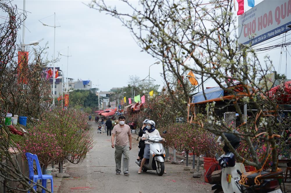 Hoa lê rừng xuống phố ngày đầu năm mới khiến người Hà Nội mê mẩn-3