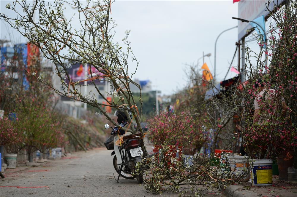 Hoa lê rừng xuống phố ngày đầu năm mới khiến người Hà Nội mê mẩn-6