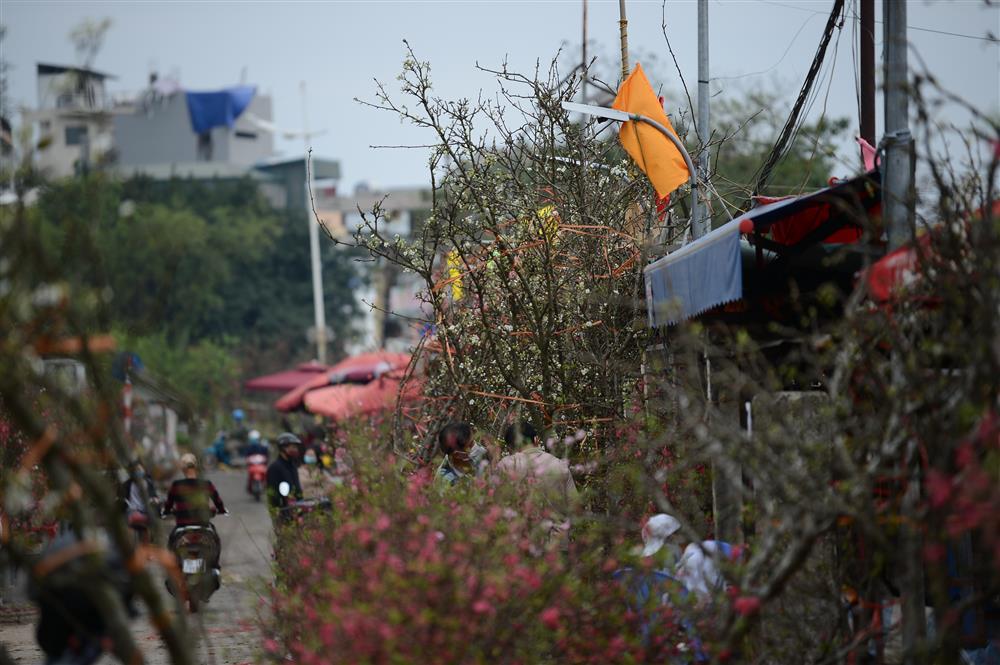 Hoa lê rừng xuống phố ngày đầu năm mới khiến người Hà Nội mê mẩn-7