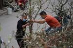Ảnh: Hàng trăm người dân Hà Nội đổ xô đi mua hoa lê về chơi Rằm tháng Giêng-16